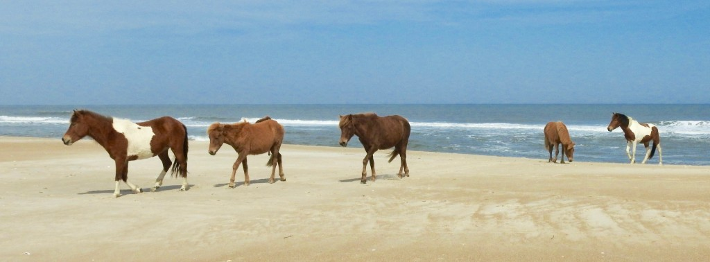 Assateague 2017